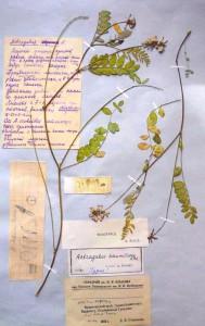 herbarium_anons