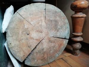 Лиственничная колода до сих пор хранится под одним из столов 4-го зала Гербария.