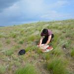 В процессе закладки гербария