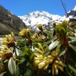 Альпийские луга Кавказа