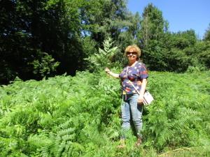 Ирина Гуреева исследует популяцию орляка обыкновенного.